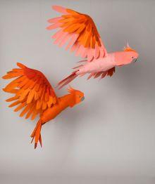 BirdsLowRes